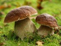Klasyfikator grzybów.