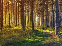 Jak nie zgubić sie w lesie?